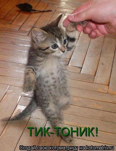 Котоматрица: ТИК-ТОНИК!