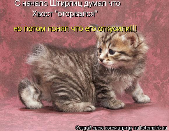 """Котоматрица: С начало Штирлиц думал что  Хвост """"оторвался"""" но потом понял что его откусили!!!"""
