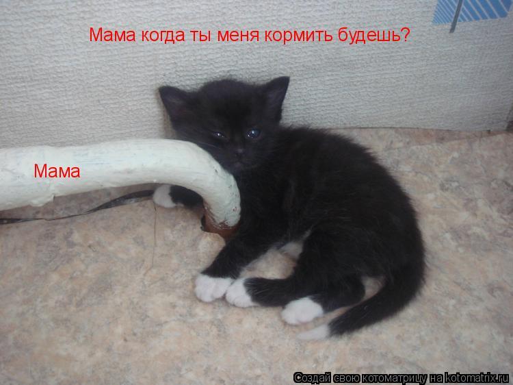 Котоматрица: Мама когда ты меня кормить будешь? Мама