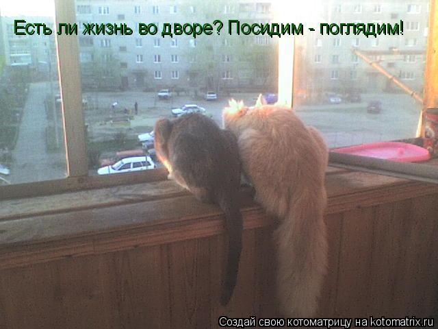 Котоматрица: Есть ли жизнь во дворе? Посидим - поглядим!