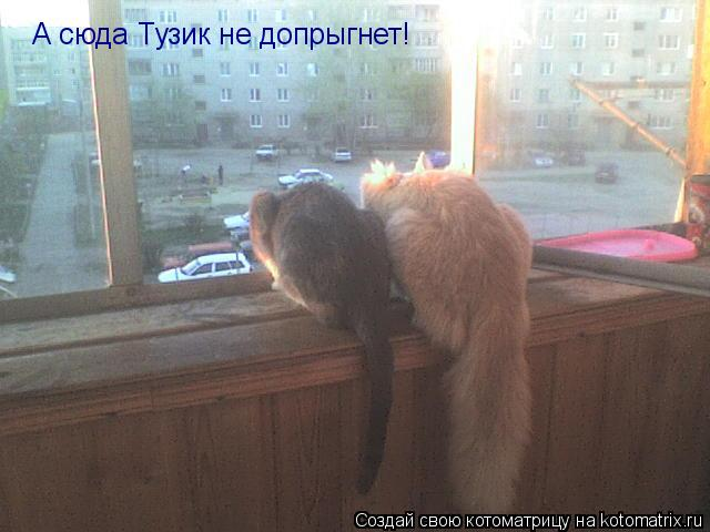 Котоматрица: А сюда Тузик не допрыгнет!