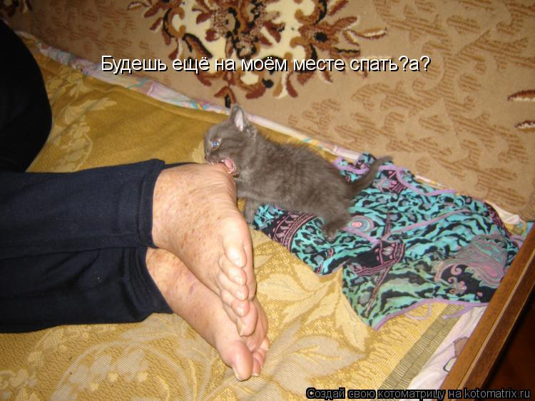 Котоматрица: Будешь ещё на моём месте спать?а?я тебе покажу Кузькину мать! Будешь ещё на моём месте спать?а?