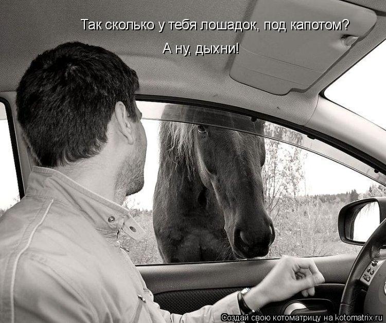Котоматрица: Так сколько у тебя лошадок, под капотом? А ну, дыхни!
