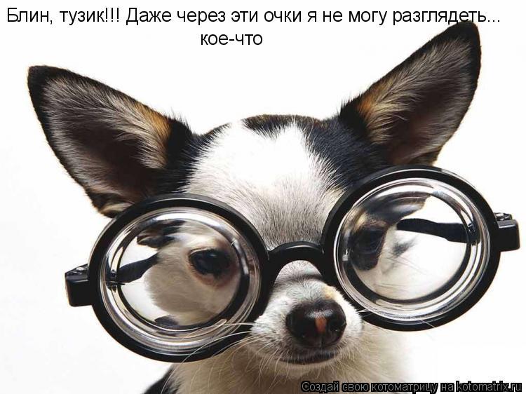 Котоматрица: Блин, тузик!!! Даже через эти очки я не могу разглядеть... кое-что