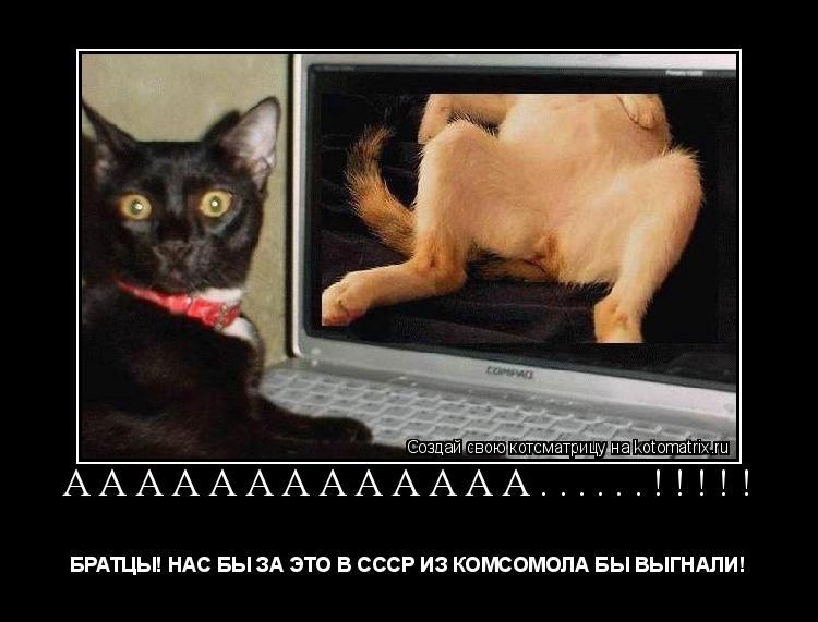 Котоматрица: Ааааааааааааа......!!!!! БРАТЦЫ! НАС БЫ ЗА ЭТО В СССР ИЗ КОМСОМОЛА БЫ ВЫГНАЛИ!