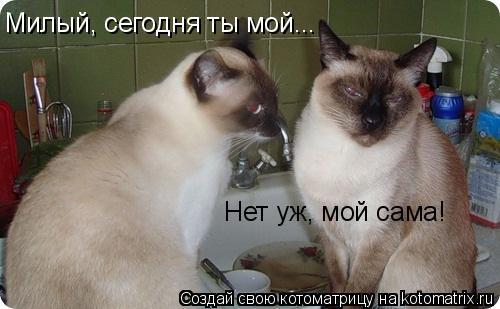 Котоматрица: Милый, сегодня ты мой... Нет уж, мой сама!