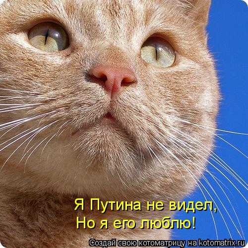 Котоматрица: Я Путина не видел, Но я его люблю!