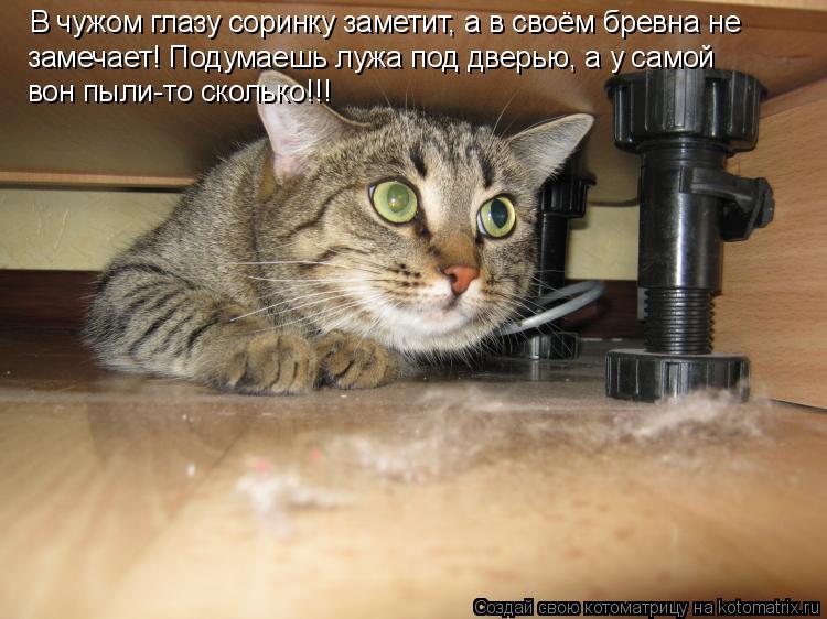 Котоматрица: В чужом глазу соринку заметит, а в своём бревна не  замечает! Подумаешь лужа под дверью, а у самой вон пыли-то сколько!!!