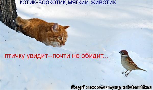 Котоматрица: котик-воркотик,мягкий животик птичку увидит--почти не обидит...