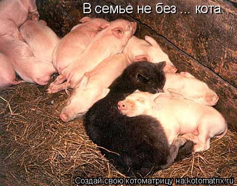 Котоматрица: В семье не без ... кота