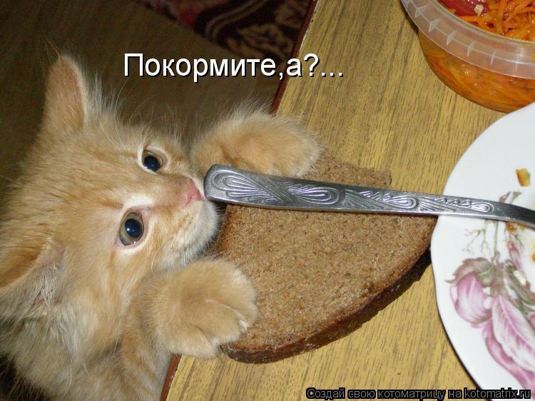 Котоматрица: Покормите,а?...