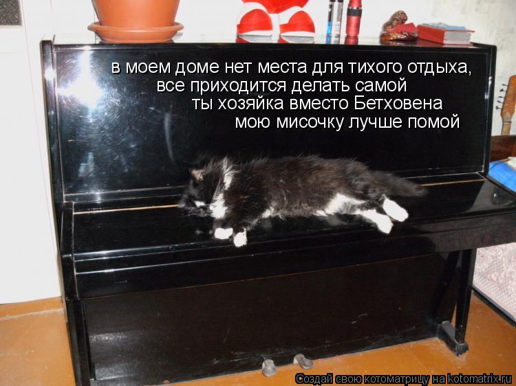 Котоматрица: в моем доме нет места для тихого отдыха,  все приходится делать самой ты хозяйка вместо Бетховена мою мисочку лучше помой