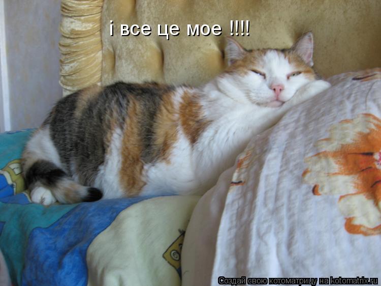Котоматрица: i все це мое !!!!