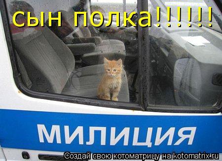 Котоматрица: сын полка!!!!!!