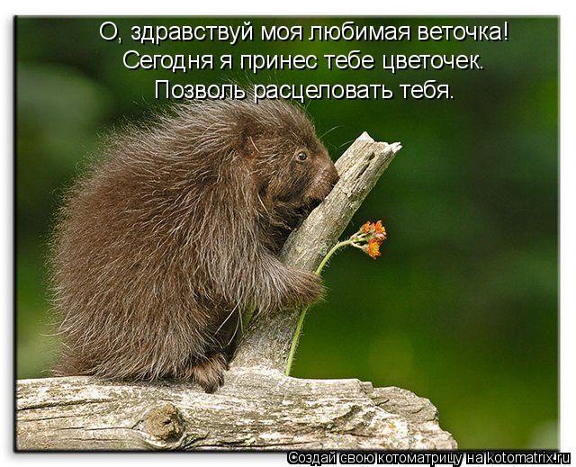 Котоматрица: О, здравствуй моя любимая веточка! Сегодня я принес тебе цветочек. Позволь расцеловать тебя.
