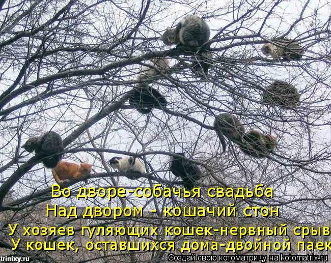 Котоматрица: Во дворе-собачья свадьба Над двором - кошачий стон У хозяев гуляющих кошек-нервный срыв  У кошек, оставшихся дома-двойной паек