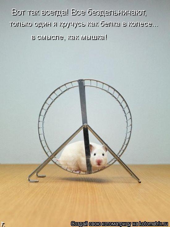 Котоматрица: Вот так всегда! Все бездельничают, только один я кручусь как белка в колесе... в смысле, как мышка!