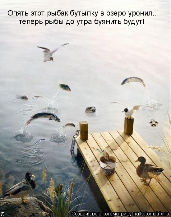 Котоматрица: Опять этот рыбак бутылку в озеро уронил... теперь рыбы до утра буянить будут!