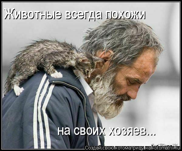 Котоматрица: Животные всегда похожи на своих хозяев...