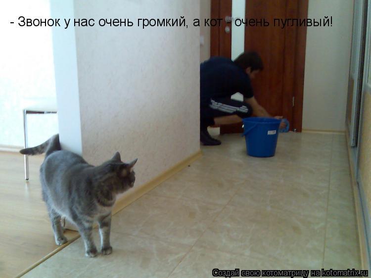 Котоматрица: - Звонок у нас очень громкий, а кот - очень пугливый!