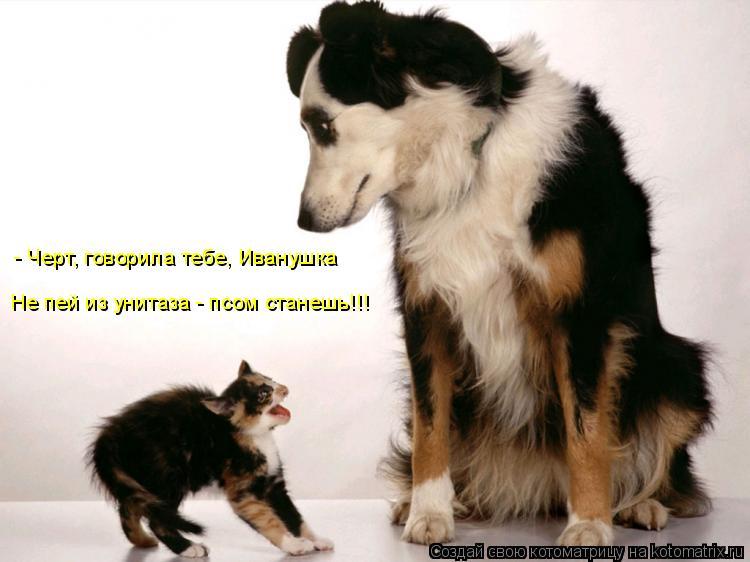 Котоматрица: - Черт, говорила тебе, Иванушка Не пей из унитаза - псом станешь!!!