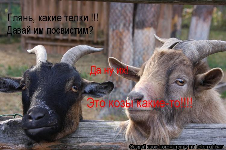 Котоматрица: Глянь, какие телки !!! Давай им посвистим? Да ну их! Это козы какие-то!!!!