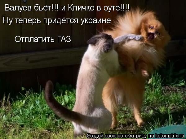 Котоматрица: Валуев бьёт!!! и Кличко в оуте!!!! Ну теперь придётся украине Отплатить ГАЗ