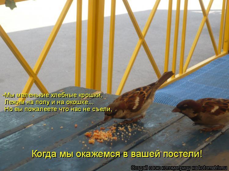Котоматрица: -Мы маленькие хлебные крошки, Лежим на полу и на окошке... Но вы пожалеете что нас не съели, Когда мы окажемся в вашей постели!
