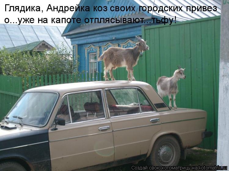 Котоматрица: Глядика, Андрейка коз своих городских привез о...уже на капоте отплясывают...тьфу!