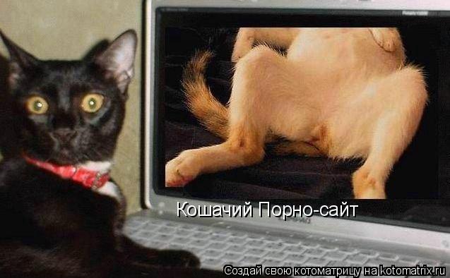 Котоматрица: Кошачий Порно-сайт