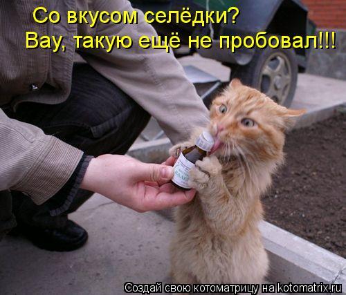 Котоматрица: Со вкусом селёдки?  Вау, такую ещё не пробовал!!!