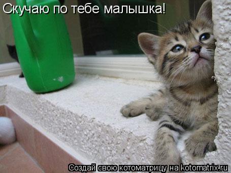 Котоматрица: Скучаю по тебе малышка!