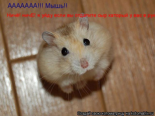 Котоматрица: ААААААА!!! Мышь!! Ничё! ничЕ! я уйду если вы отдатите сыр каторый у вас в руке