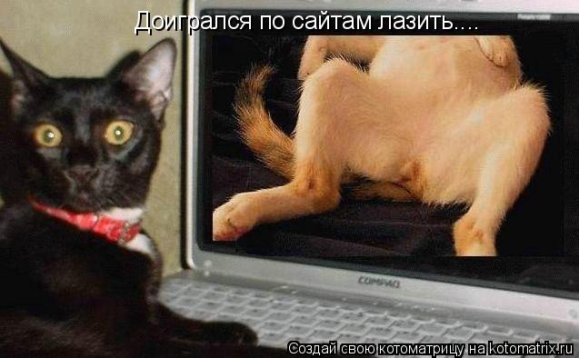 Котоматрица: Доигрался по сайтам лазить....