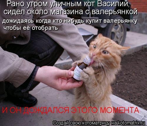 Котоматрица: Рано утром уличным кот Василий,  сидел около магазина с валерьянкой дожидаясь когда кто нибудь купит валерьянку чтобы её отобрать И ОН ДОЖД