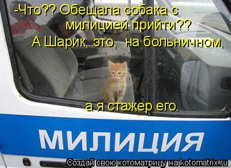 Котоматрица: -Что?? Обещала собака с  милицией прийти??  А Шарик, это,  на больничном,  а я стажер его.