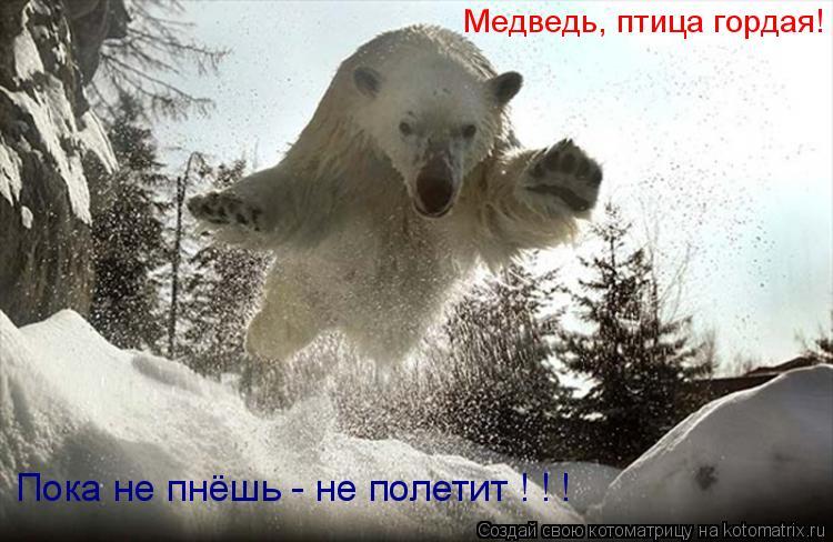 Котоматрица: Медведь, птица гордая! Пока не пнёшь - не полетит ! ! !