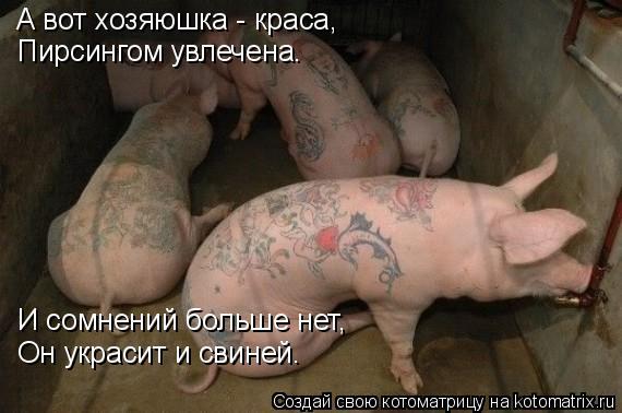 Котоматрица: А вот хозяюшка - краса, Пирсингом увлечена. И сомнений больше нет, Он украсит и свиней.