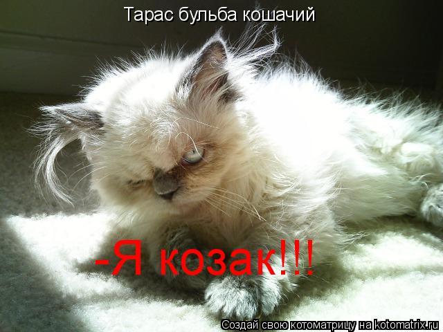 Котоматрица: Тарас бульба кошачий -Я козак!!!