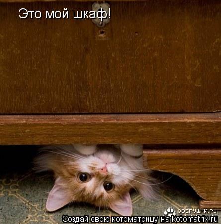 Котоматрица: Это мой шкаф!