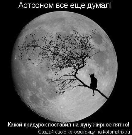 Котоматрица: Астроном всё ещё думал! Какой придурок поставил на луну жирное пятно!