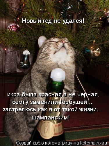 Котоматрица: Новый год не удался! икра была красная,а не черная. семгу заменили горбушей... шампанским! застрелюсь как я от такой жизни...