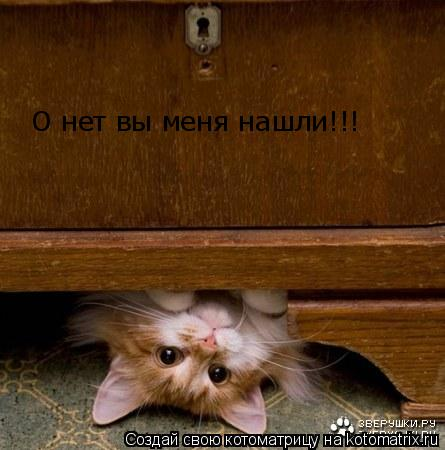 Котоматрица: О нет вы меня нашли!!!