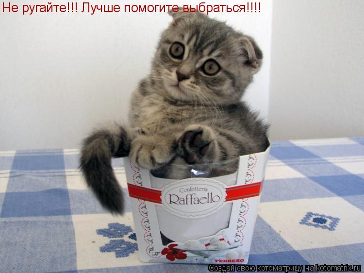 Котоматрица: Не ругайте!!! Лучше помогите выбраться!!!!