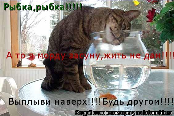 Котоматрица: Рыбка,рыбка!!!!!  Выплыви наверх!!!!Будь другом!!!! А то я морду засуну,жить не дам!!!!