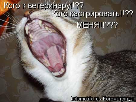 Котоматрица: Кого к ветеринару!!?? Кого кастрировать!!?? МЕНЯ!!???