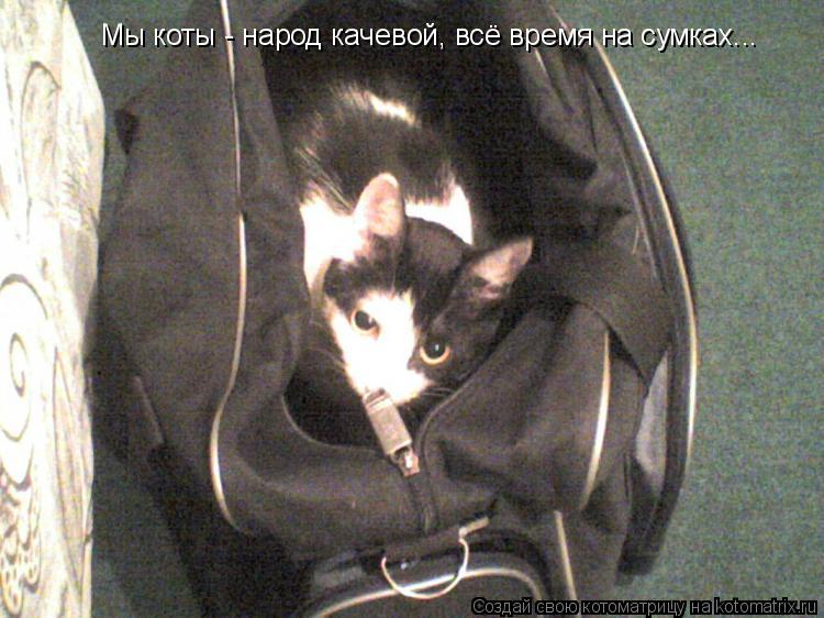 Котоматрица: Мы коты - народ качевой, всё время на сумках...