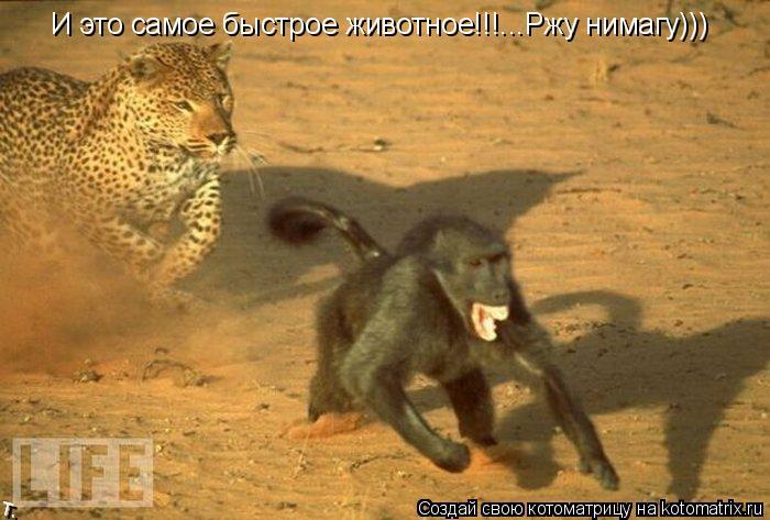 Котоматрица: И это самое быстрое животное!!!...Ржу нимагу)))