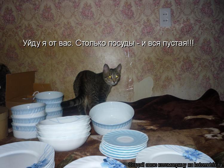 Котоматрица: Уйду я от вас. Столько посуды - и вся пустая!!!