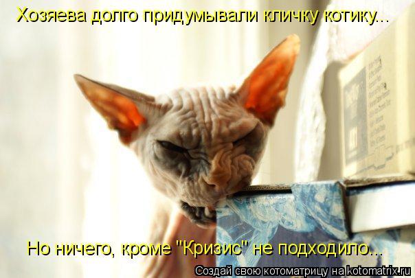 """Котоматрица: Хозяева долго придумывали кличку котику... Но ничего, кроме """"Кризис"""" не подходило..."""